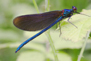 Going Buggy: Fun & Facts About Insects @ Moore Memorial Public Library | Texas City | Texas | United States